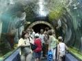 oceanarium-nyiregyhaza